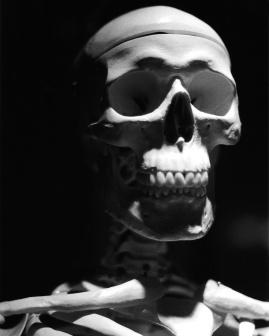 Traditional film portrait of RSU's resident reference skeleton, Mr. Bones.